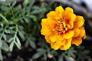 flower_small